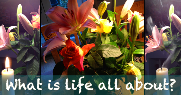 What is life all about?